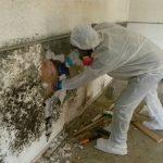 mold-remediation-service