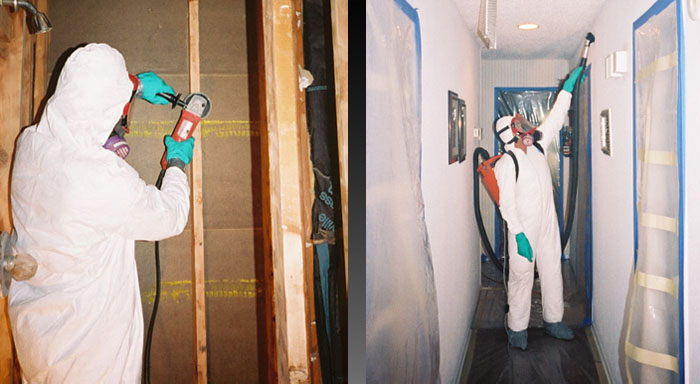 mold-remediation-service